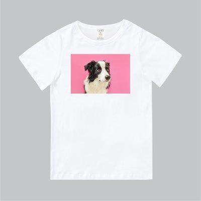 T365 MIT 親子 童裝 情侶 T恤 T-shirt 短T 狗 DOG 邊境牧羊犬 Border collie 毛孩