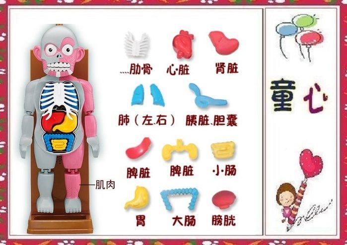 驚嚇人體模型玩具 人體器官組裝遊戲~最新超夯桌遊 ~刺激有趣◎童心玩具1館◎