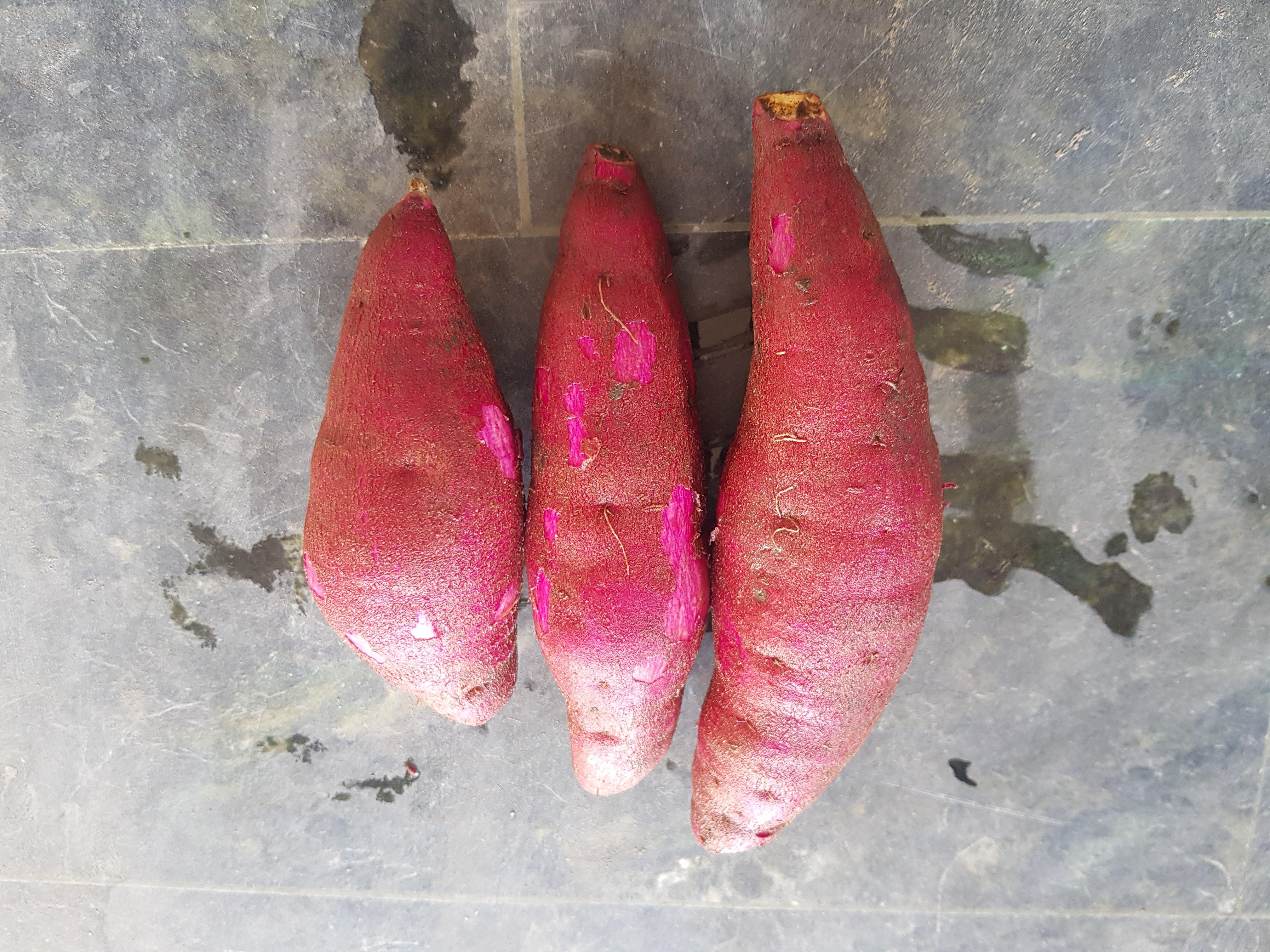 慧軒農場 栗子地瓜小的20斤特價880元免運費