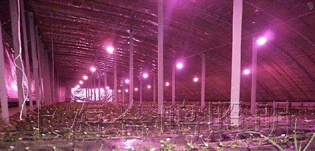 補光燈:植物生長燈100WLED高棚植物燈:防水IP65