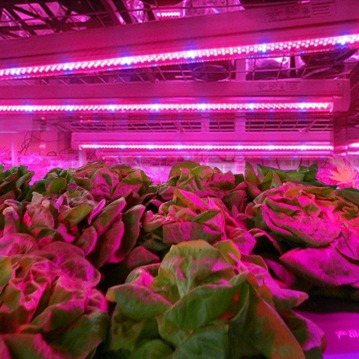 5Cgo【權宇】專業農場用植物生長 紅藍可自選配比 LED燈 種植光合園藝花卉補光育苗開花蔬果節能6~18W 一年保含稅