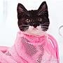 寵物包洗貓袋貓咪洗澡神器寵物剪指甲打針防...