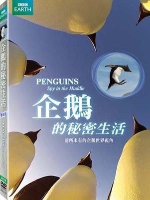 (全新未拆封)企鵝的秘密生活 PENGUINS-SPY IN THE HUDDLE DVD(得利公司貨)