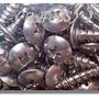 《《日昇 ZS》》白鐵車殼螺絲/ 鐵板牙:山葉....