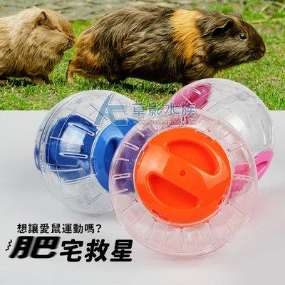 【AC草影】倉鼠的健身工廠(滾球)【一個】