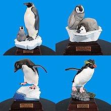 現貨~限量特價! 正版授權 精緻收藏 NTC圖鑑 南極大陸生命紀行 企鵝 4款一套