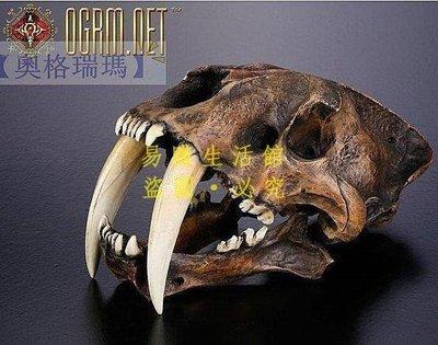 [王哥廠家直销]啟示錄系列 金標精工 1:1劍齒虎頭骨模型瀝青礦版 預定 骨骼頭骨化石收藏擺件擺飾LeGou_1593_1