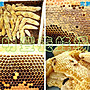 新蜜上市.自然熟成封蠟龍眼蜜《明豐養蜂場》龍眼蜂蜜3000g=3kg=3公斤=5台斤 另售蜂王乳 花粉 蜂蠟 百花蜜