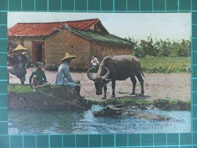 日據時期明信片:水牛、土塊家屋