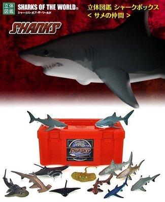 Colorata Sharks of the world 沙魚 立体圖鑑