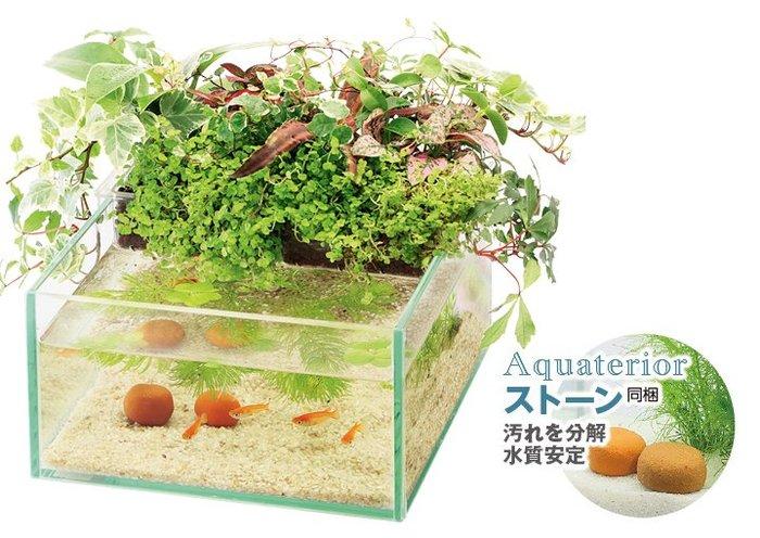 《魚趣館》日本 Suisaku 水作 魚草生態缸