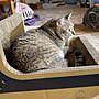 MIT加寬版 固塞貓抓窩 滿額 免運 優惠中 貓抓板 貓屋 貓窩 專賣 貓用品【紙創無限】
