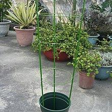 『特價$250』8mm/11mm花卉植物 爬藤架 DIY爬藤架 陽台花園種植