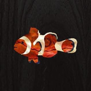 [園之屋] 現貨 日本 Inlay sticker 小丑魚 海洋系列 吉他 烏克麗麗 琴頭/琴身/護板貼紙