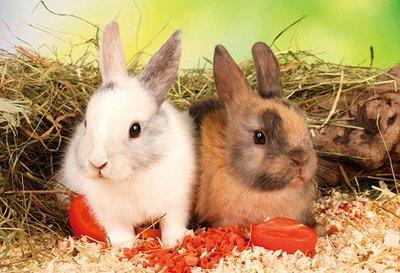 日本進口拼圖 兔子108片大片拼圖 88-107
