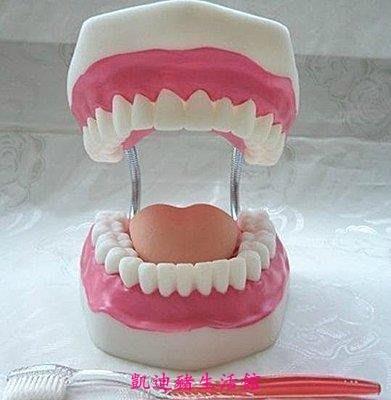 【凱迪豬生活館】牙齒護理牙無牙縫、人體牙齒模型護理、牙齒示教人體口腔6倍放大KTZ-200950