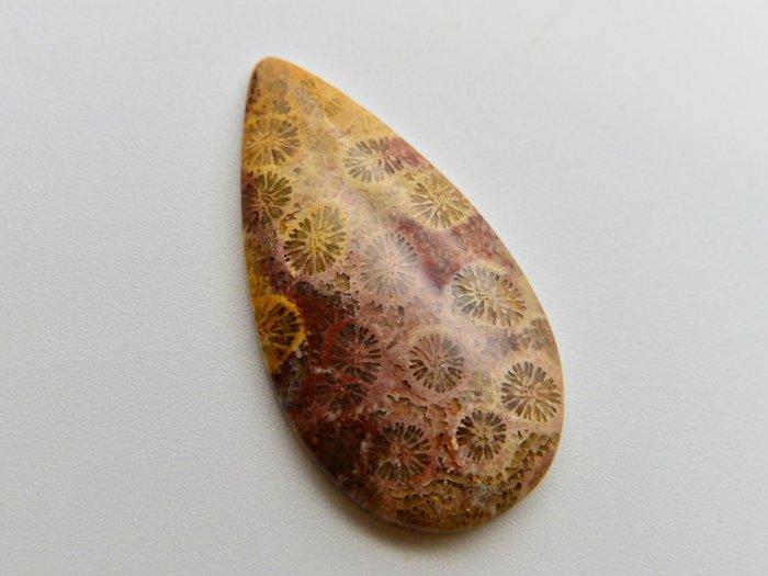 天然珊瑚玉  玉化水滴型大蛋面 裸石 戒面 31.41CT
