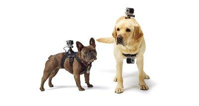 【eWhat億華】GoPro ADOGM-001 寵物綁帶 DOG HARNESS 公司貨 HERO 3 HERO 4