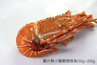 【烤肉系列】熟小龍蝦(切半)/約320g±5%/尾~來點新鮮的烤小龍蝦~飽滿的肉質輕甜鮮香的風味~不愧稱為「海鮮之王」