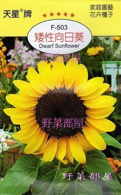 【野菜部屋~】Y43 矮性向日葵Dwarf Sunflower~天星牌原包裝種子~每包15元~