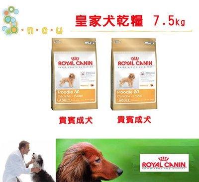 【宅-不可超取】☆SNOW的家☆法國皇家 PRP30貴賓成犬7.5kg(80070284