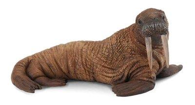 【阿LIN】88569A 海象 PROCON CollectA 動物模型 仿真動物模型 動物