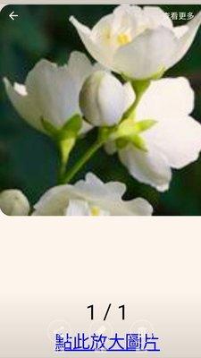茉莉花香氛油。