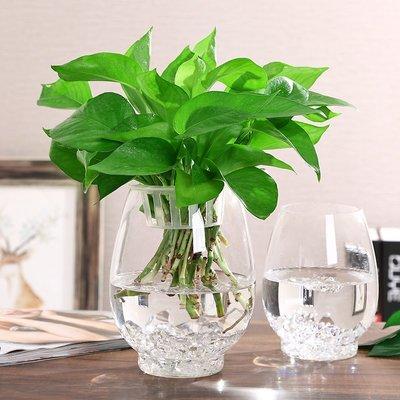 歐式花瓶簡約大號玻璃花瓶透明創意室內魚缸水培水養綠蘿植物器皿客廳擺件