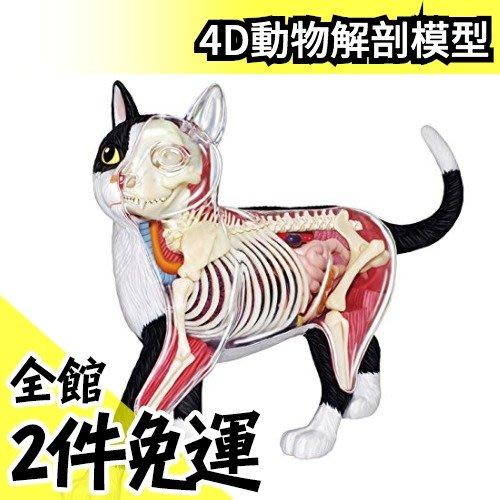 【NO.29貓】日版 青島文化教材社 AOSHIMA 4D立體拼圖 解剖模型 動物解剖【水貨碼頭】