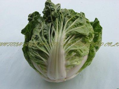 ~大包裝蔬菜種子~夏天結球白菜~最 夏天種植,因為較野性,風雨後恢復力強~