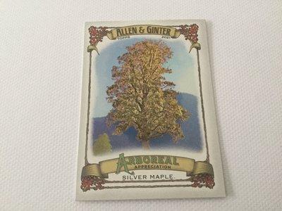 Silver Maple  Allen & Ginter Arboreal Appreciation AA3