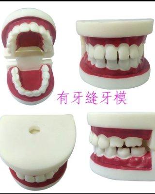 保母術科練習牙齒模型/洗澡娃娃-齒模(現貨供應)~學齡前寶寶練習刷牙牙齒模型  保母考照練習 牙模   。幼兒教學。保母考試   教學模具