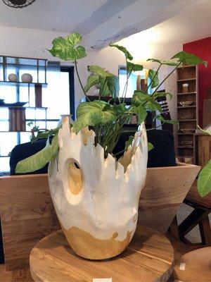 柚木擺飾花器-White Wing Vase