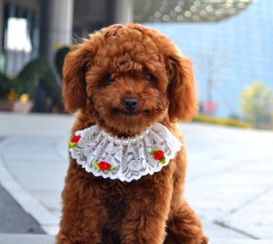 純手工縫製蕾絲犬貓專用項鍊㊝強烈推薦㊝(黑&白兩色可選)
