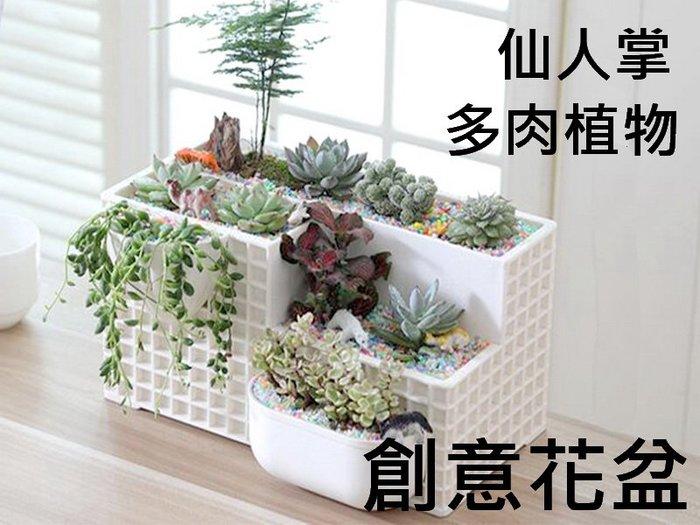 仙人掌 多肉植物 創意花盆 栽培盆 園藝桌面盆栽 辦公室文具盒 筆筒