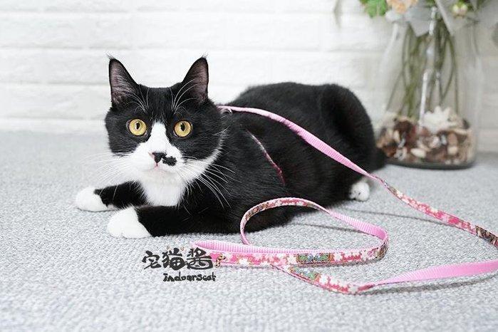 小软萌咯!宅貓醬 引著主子走天涯 貓用牽引繩牽引帶遛貓好物貓咪胸背式鏈子