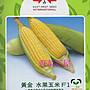 【野菜部屋~ 】N05 黃金水果玉米種子3兩(約9...