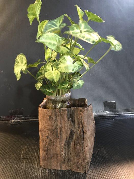 【 檜人檜語 】風化 青鋼櫟筆筒 花器5