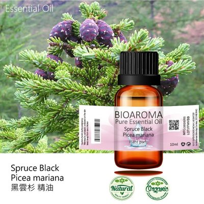 【純露工坊】黑雲杉精油Spruce Black - Picea mariana  100ml