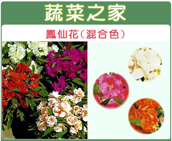 【蔬菜之家】H31.鳳仙花種子20顆(混合色,高35cm.花卉種子)