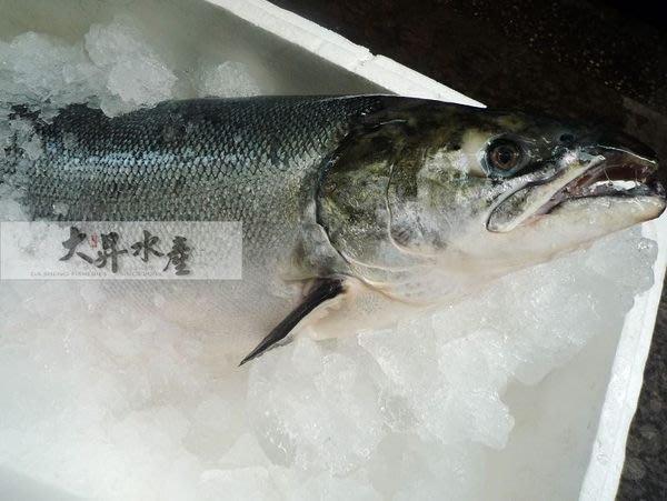【大昇水產】嚴選挪威產地直送最新鮮_每週一.三.五空運現殺鮭魚(非冷凍魚)
