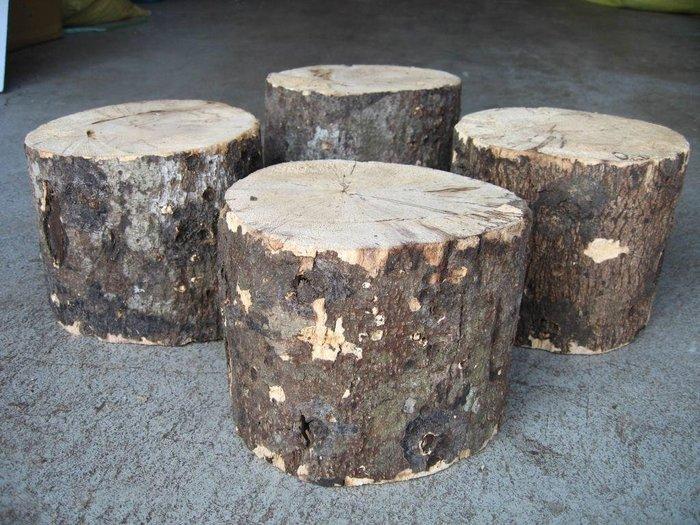 【虫話森林】優質國產優質產卵木【XL】(甲蟲,鍬形蟲、昆蟲、獨角仙)