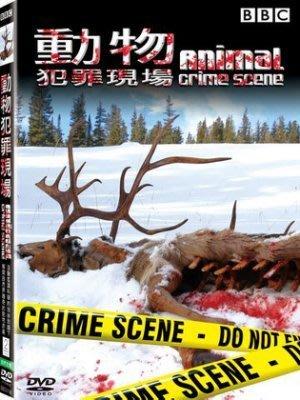 <<影音風暴>>(BBC)動物犯罪現場  DVD  全250分鐘(下標即賣)