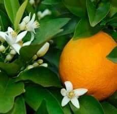 甜橙精油100ml,+柑橘精油100ml,玻璃瓶分裝,