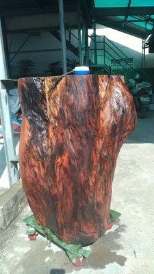 台灣紅櫸木 紅雞油 G 非 樹榴 檜木 龍柏 沉水肖楠 紅豆杉 亞杉 烏心石 牛樟 紅欅木