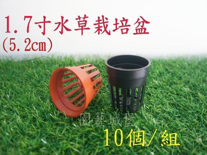 【園藝城堡】1.7寸(5.2cm)水草栽培盆10個/組《磚紅色下標區》