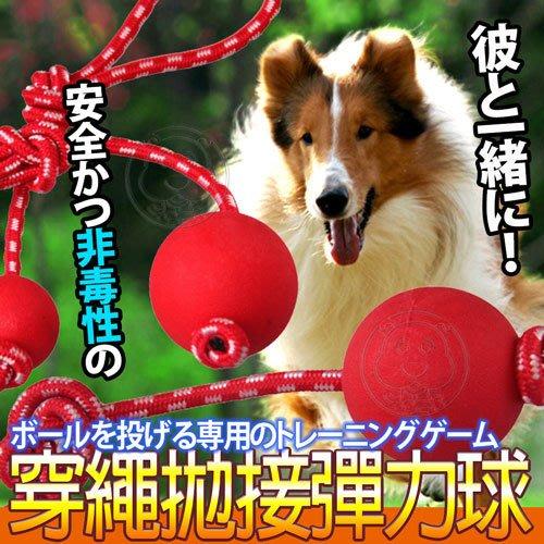【🐱🐶培菓寵物48H出貨🐰🐹】dyy》安全耐咬拋穿繩彈力球玩具L號直徑7.5cm 特價109元