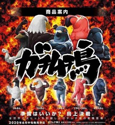 Yung108 請限過數預訂6月 全5款 筋肉鳥 PART 3 戰鬥筋肉雞 Q版動物 MEDICOM TOY 扭蛋膠