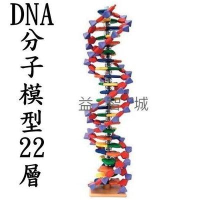 益智城《分子模型/DNA模型/DIY組合/教學模型/實驗器材》英國Molymod DNA分子模型(22層)4組含稅