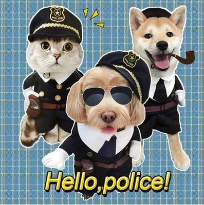你家的主子就是和別人不一樣~2016超萌的喵站長 貓咪裝 寵物角色扮演警察警長服裝 快來萌翻眾人的眼睛